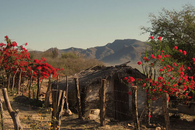 Alamos Mountains