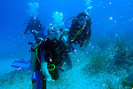 Scuba Diving near Playa del Carmen